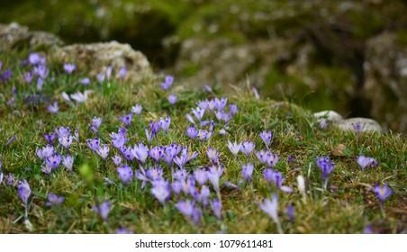 A wonderful purple meadow