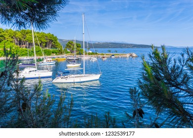 Wonderful romantic old town at Adriatic sea. Boats and yachts in harbor at magical summer view through pine trees branches. Krk. Krk island. Croatia. Europe.