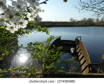 wonderful scene at a dutch river with cherry blossoms and a river with boats in the background, sun is shining on a blue sky