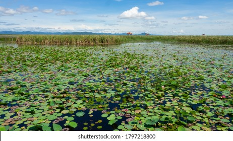 Wonderful Scenery of Largest Lotus Pond with blue sky background in Thailand at Sam Roi Yot National Park, Thailand.