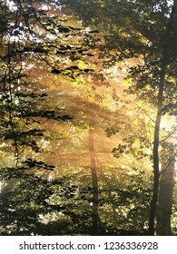 A wonderful shot of very bright light and sunbeams shining through the foliage of beech trees in a forest on a wonderful morning. The image is looks natual and inspirational and makes you feel happy.