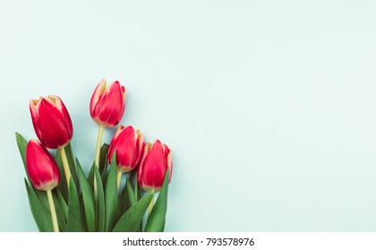 Wonderful spring tulips on the light blue background. Top view image. Copy space