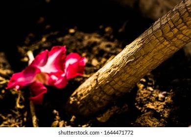 Wonderful stem of the desert flower tree