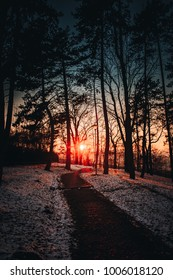 Wonderful sunset in the park