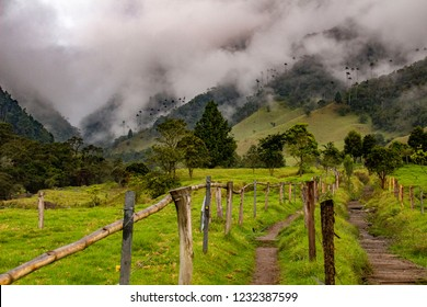 Wonderful Valle del Cocora, Colombia