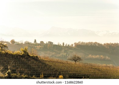 Wonderful view of the grape fields in autumn in Barolo valley with Monviso mountain in the background