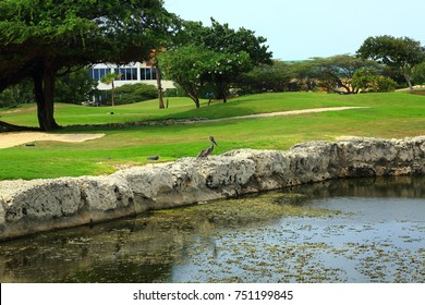 Wonderful view on amazing natural landscape with a bird and small river. Aruba island. September, 2017