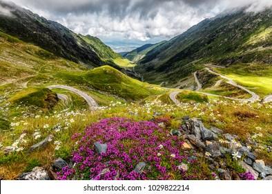 wonderful view on Transfagarasan Road with fresh purple flowers oh foreground in springtime. Transilvania. Fagaras Ridge. Carpathian mountains. East Europe. Beauty in the World. postcard