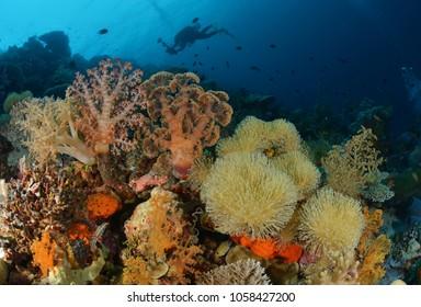 Wonderful Wakatobi for SCUBA diving amazing colorful soft coral