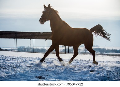 Wonderful winter horse walks.