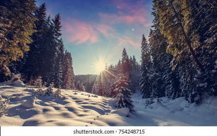Wonderful winter landscape. snowcovered pine tree under sunlight.  overcast colorful clouds, glowing in sunlight. christmas holiday concept. picturesque amazing scene. wintry sunny day. postcard