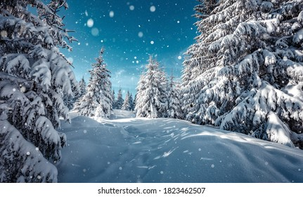 Wonderful wintry landscape. Winter mountain forest. frosty trees under warm sunlight. picturesque nature scenery. creative artistic image. Nature background. winter holiday day. Christlmas concept - Shutterstock ID 1823462507