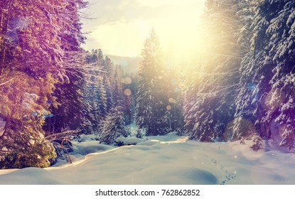 Wonderful wintry landscape. Winter mountain forest. frosty trees under warm sunlight. picturesque nature scenery. creative artistic image. Nature background. winter holyday day