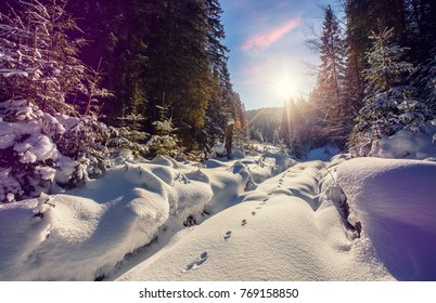 Wonderful wintry landscape. Winter mountain forest. frosty trees under warm sunlight. picturesque nature scenery. creative artistic image. Nature background. winter holyday background.