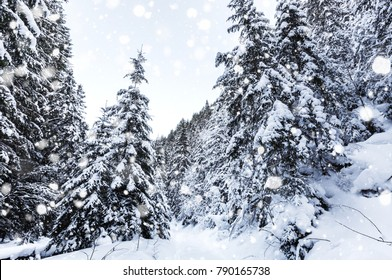 Wonderful wintry landscape. Winter mountain forest. Majestic Mountain on background. creative artistic Colage.