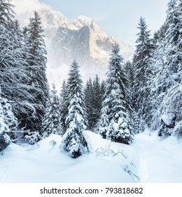 Wonderful wintry landscape. Winter mountain forest. Majestic Mountain on background. creative artistic Colage. Majestic snow capped mountains in the Canadian Rockies