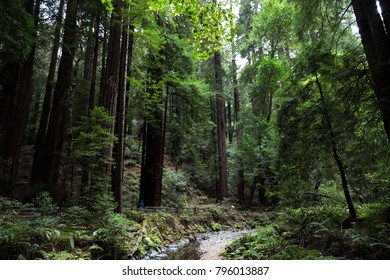 Wonderful wood park in California