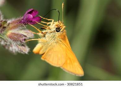 wonderful yellow butterfly on flower