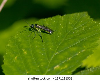 wondering green fly