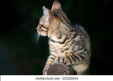 A wondering kitten