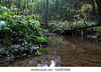 In the wood among various plants flows wagging a wide but not deep stream. Through water the sandy bottom is well visible.