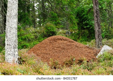 Wood Ant nest in a Swedish Forest
