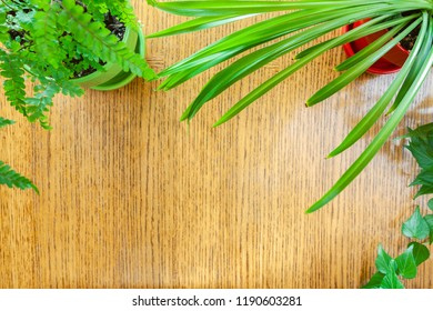 Wood background bordered by potted houseplants shot from above with room for copy space. Setting in natural daylight.
