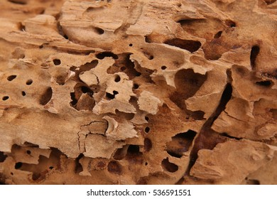 Wood background. Nature beauty. Carpenter ants excavated galleries in wood.