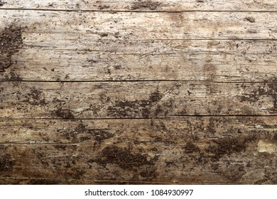 Wood background, tree trunk without bark
