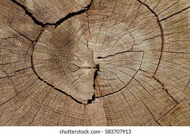Wood Background: Weathered Oak Tree Cross-Section Closeup