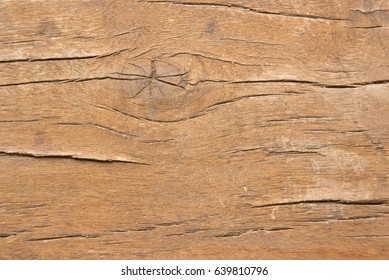 Wood backround texture. Macro photo. Natural photo.
