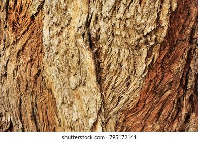 Wood bark organic texture.
