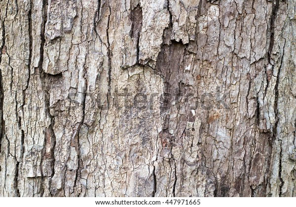 Wood Bark for texture