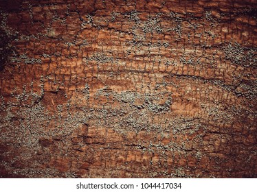 Wood bark texture, nature, rough surface, timber