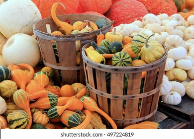 Wood baskets filled with gourds, surrounded by astounding variety of bright and colorful pumpkins at farmers market.