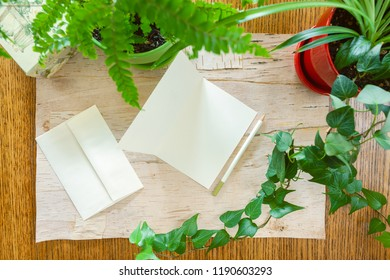 Wood and birch bark background with blank note cards bordered by potted houseplants shot from above with room for copy space. Setting in natural daylight.