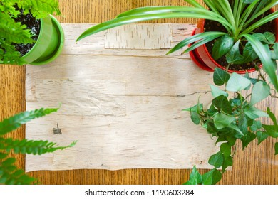 Wood and birch bark background bordered by potted houseplants shot from above with room for copy space. Setting in natural daylight.