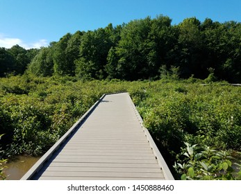 wood boardwalk or path in wetland or swamp area with green plants