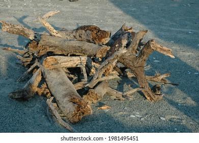wood for bonefire in Afrikan salt pan