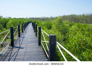 Wood bridge along the Mangrove forrest.