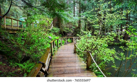 Wood bridge in the green forest after raining