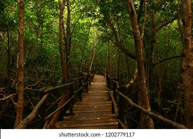 a wood bridge in jozani monkey forest zanzibar tanzania africa