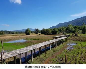 wood bridge to rice field in Thailand