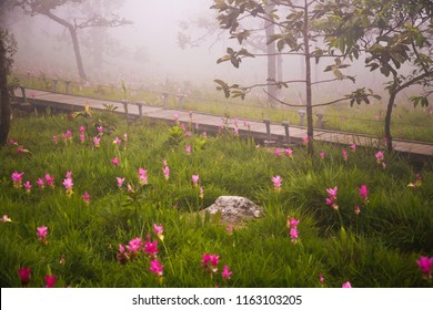 Blue mist flower images stock photos vectors shutterstock wood bridge the road is filled with fresh pink flowers and white mist all over mightylinksfo