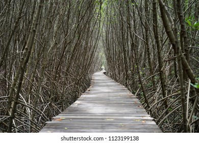 Wood bridge walkway mangrove forest Thailand