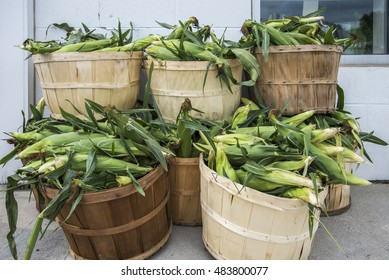 Wood bushel baskets overfilled with newly picked corn outside a farmers market.