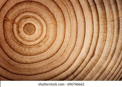 Wood cedar circle texture slice background.