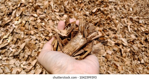 wood chip for pulp and paper industrial