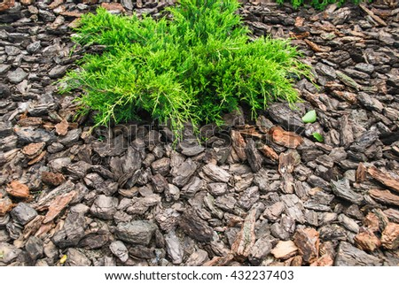 Wood chips for landscaping in the gardens. Ecological background.The land  dotted with pine - Wood Chips Landscaping Gardens Ecological Background Stock Photo