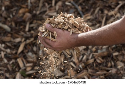 wood chips as a renewable heating fuel and energy source